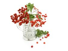 Free Bouquet Of A Ashberry Royalty Free Stock Image - 6238466