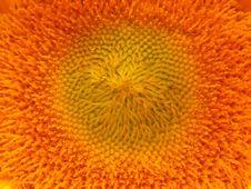 Free Sunburst Stock Image - 6238561