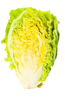 Free Cabbage Royalty Free Stock Photos - 6238658