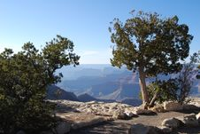 Free Trees On The Grand Canyon Royalty Free Stock Photo - 6238685
