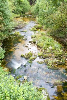 Stream In The Green Stock Photos