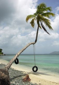 Free The Palm Swing Royalty Free Stock Photo - 6238875