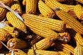 Free Close-up Image Of Indian Corn Stock Photos - 6242523