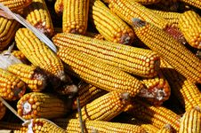 Free Close-up Image Of Indian Corn Stock Photos - 6242523