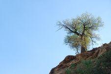 Free Tree Stock Photo - 6242630