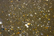 Free Shells Royalty Free Stock Photography - 6242907