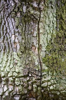 Detail Of Cure Tree Royalty Free Stock Images