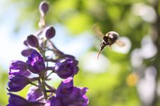 Free Bee Attack Royalty Free Stock Photography - 6243877