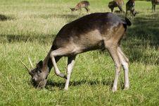 Free Deer Stock Image - 6244301