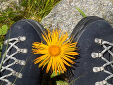 Boots And Flower Stock Image
