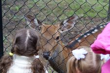 Free Deer And Children Royalty Free Stock Photos - 6245358