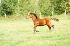 Free Foal Stock Images - 6245624