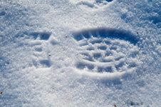 Free Footprint In Snow Stock Photo - 6247080