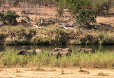 Free Herd Of African Elephants Stock Photography - 6247432