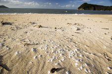Shells At Abel Tasman Nationalpark Royalty Free Stock Photo