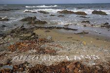 Free New Zealand Beach Royalty Free Stock Photo - 6248675