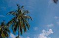 Free Palm Trees At Maldives Stock Photography - 62401052