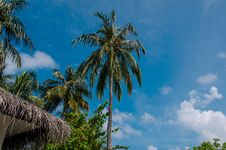Palm Trees At Maldives Royalty Free Stock Photos