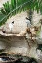 Free Large Wild Birds Royalty Free Stock Photos - 6251218