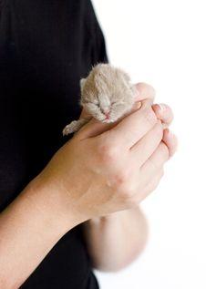 Free Little Kitty Stock Image - 6251291
