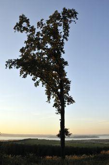 Free Large Tree Royalty Free Stock Image - 6251716