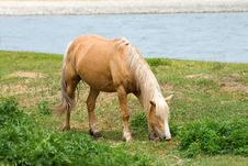 Free Horse About River Royalty Free Stock Photos - 6254628