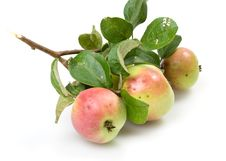 Free Fresh Apple Stock Photography - 6254892
