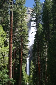 Free Yosemite Falls Forest Royalty Free Stock Photo - 6255135