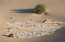 Free Shrubs In Sand Dunes Stock Photos - 6255263