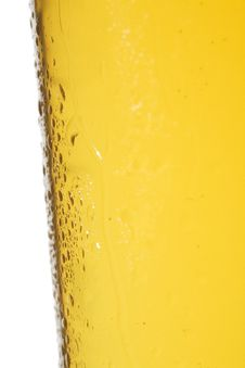 Free Light Beer Glass Stock Photo - 6255790