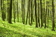 Free Forest Royalty Free Stock Image - 6256256