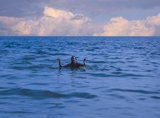Free Submerging Stock Photos - 6258293