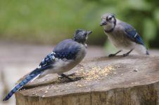 Free Pecking Order Stock Images - 6258454
