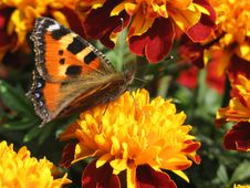 Free Orange Butterfly Stock Photography - 6259182
