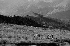 Free Horse In Morning Sunlight Stock Image - 6259551