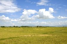 Free Rice Field Stock Image - 6259921