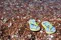 Free Gravel Beach Royalty Free Stock Photo - 6264105