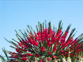 Free Bunch Of Red Flowers Royalty Free Stock Photography - 6269007