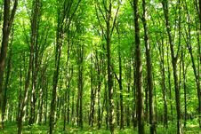 Free Green Forest Stock Photos - 6261033