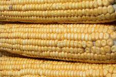 Free Indian Corn Stock Photos - 6261523