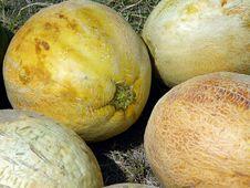 Free Cantaloupes Stock Images - 6262094