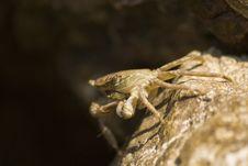 Free Crab Closeup Stock Images - 6262184