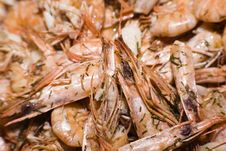 Free Sea Food Stock Images - 6264124