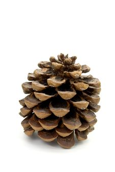Free Pine Cone - On The White Background Isolated Stock Images - 6264134