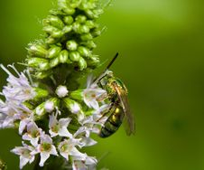 Free Bee On Flower Stock Image - 6264181