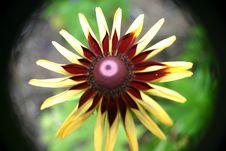 Free Daisy Stock Photography - 6264672
