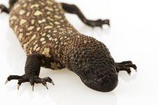 Free Mexican Beaded Lizard (Heloderma Horridum) Stock Photos - 6266553