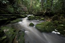 Free Forest Stream 1 Royalty Free Stock Images - 6266579
