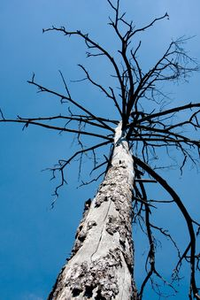 Free Old Tree Stock Photo - 6266610