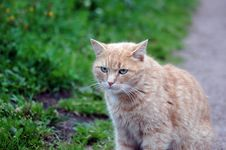 Free Red Green-eyed Cat Stock Image - 6269341